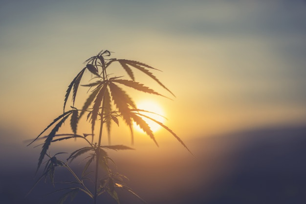 Why You Should Switch from Antidepressants to CBD Oil 2019   10% Off